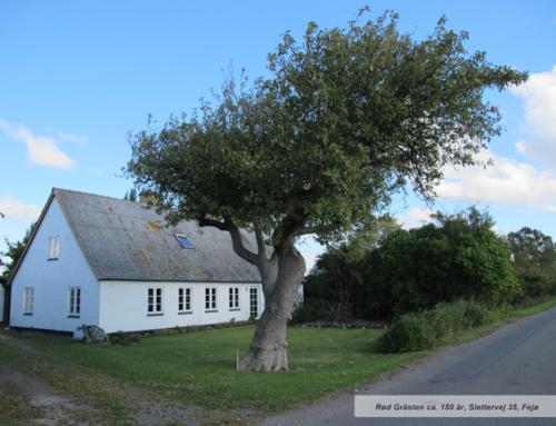 Kortlægning af gamle frugttræer på Fejø